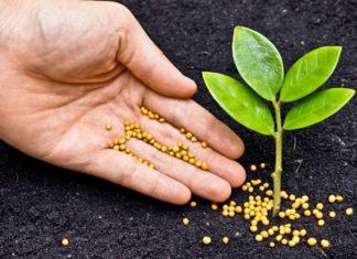 Podstawy nawożenia roślin. Warto wiedzieć, dlaczego, jak i kiedy nawozić