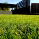 Chcesz mieć piękny trawnik latem - zadbaj o niego już na wiosnę