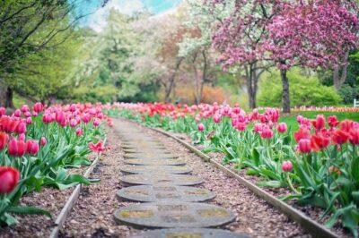 Na co zwrócić uwagę, projektując ogród